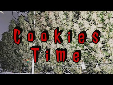 Only Girls Scout Cookies Genetics 25 Cannabis Strains Compilation