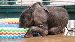 楽しいパオーン!水遊びに大興奮するゾウの赤ちゃん