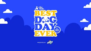 The Best Dog Day Ever: At Home Edition | The Dodo