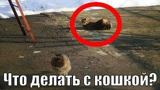 Кот и кошка любовь | Кот не знает, что делать с кошкой |  Полюби меня, я тебе понравлюсь)