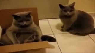Śmieszne koty - Koty i Kac, Wpadki, Walki ! - KOMPILACJA ## HD