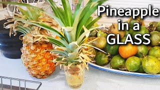 How to Grow a Pineapple Plant in a Glass of water