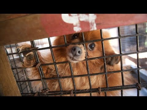 North Carolina Puppy Mill Rescue
