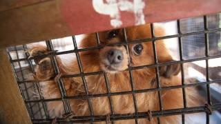 North Carolina Puppy Mill Rescue