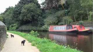 Todmorden to Hebden Bridge - A Canal Towpath Journey with Monkey Dogs