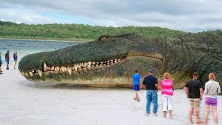 THE BIGGEST CROCODILES IN HISTORY