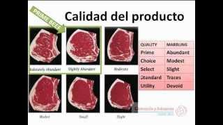 Fracción arancelaria y calidad del producto: bases para exportar