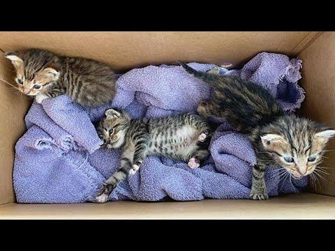 Rescue 3 Sibling Little Kittens So Feisty
