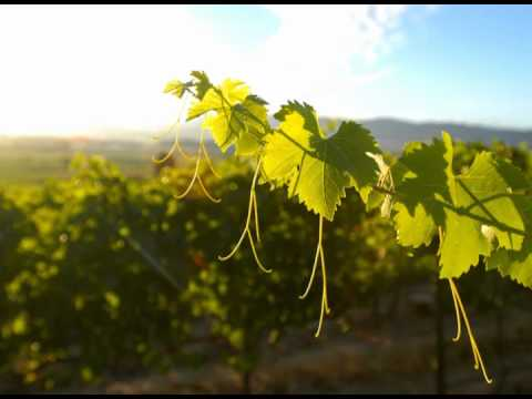 wine article Wines of Chile Organization Video