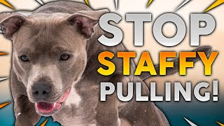 STAFFORDSHIRE BULL TERRIER TRAINING! How To Stop Your Staffy From Pulling On Walks!