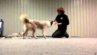Training multiple dogs