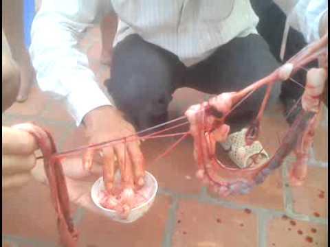 Làm thịt rắn hổ mang
