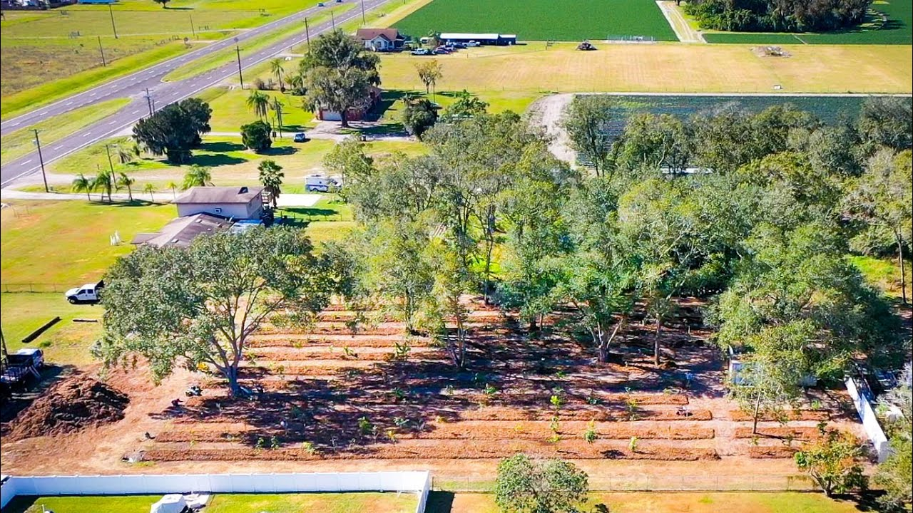 HUGE Tropical Fruit Tree Grove! 3 Acre Install Site in Plant City, FL