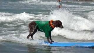 Surfer Dog Hangs 10 - 2009 Dog Surfing Helen Woodward Large Dog Heat