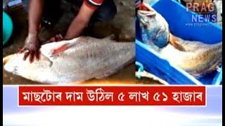 "5.5 Lakh lottery in just 20 minutes!!! A Ghol fish makes two fishermen brother ""lakhpati"" thumbnail"