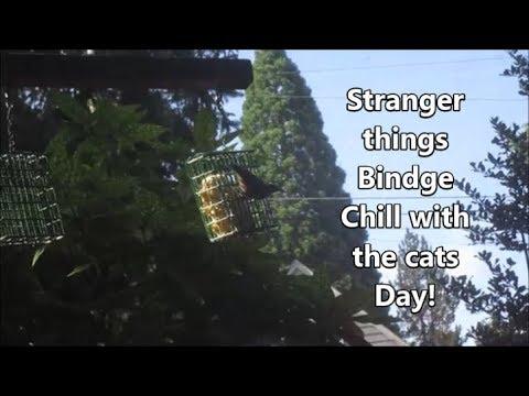Stranger things Binge 7.14.19 day2209