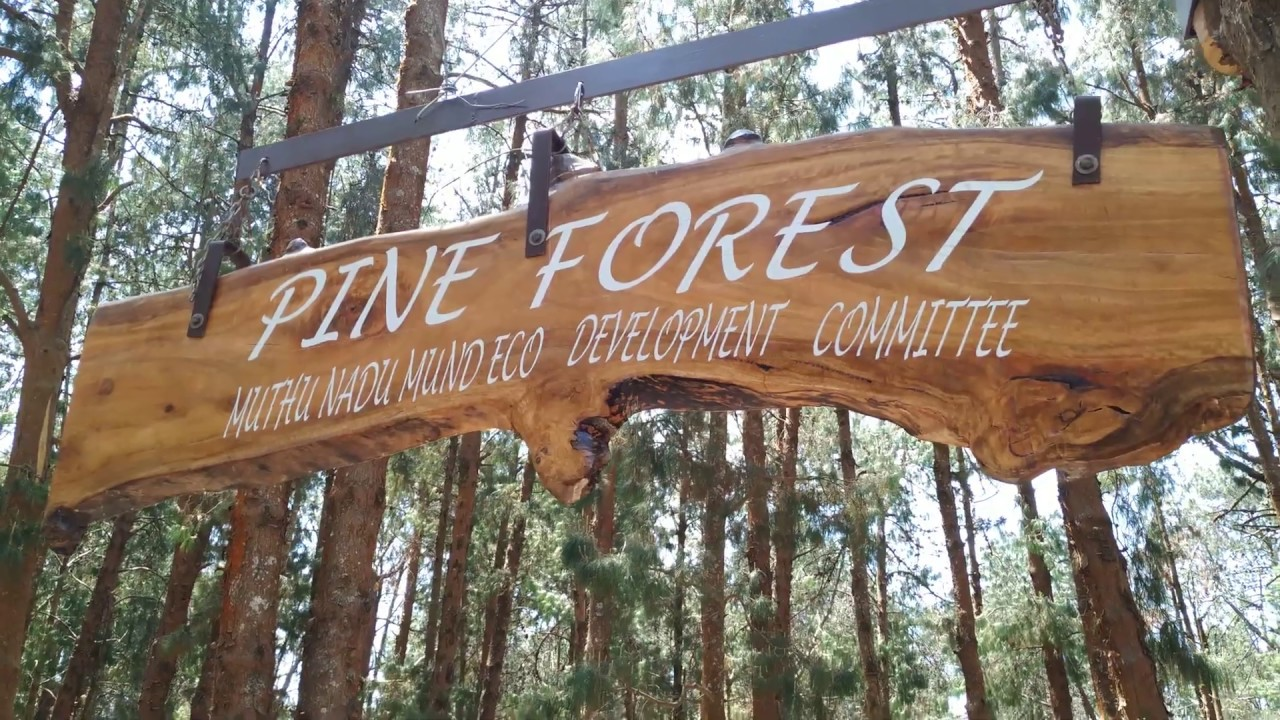 Pine Forest Ooty/ Travel guide/Best places to visit in Ooty/Beautiful nature's view/ Don't