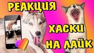 Реакция на Лучшие ЛАЙК видео приколы из Like приложения 2019