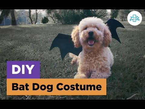 How To Make A HALLOWEEN Bat Costume To Your Dog | DIY