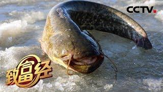 《致富经》 20190829 他把东北鲶鱼卖到千湖之省| CCTV农业