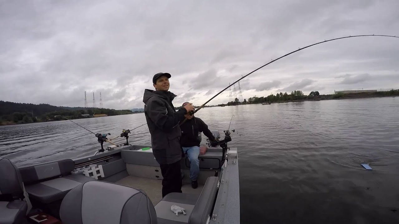 Spring chinook salmon fishing on the willamette river june for Willamette river fishing report