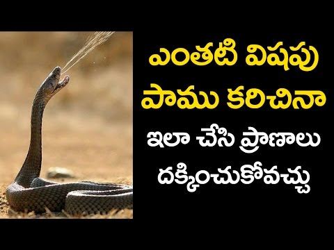 Snake BITE TREATMENT | How to Treat a Person with a Snake Bite | Unknown Facts | VTube Telugu