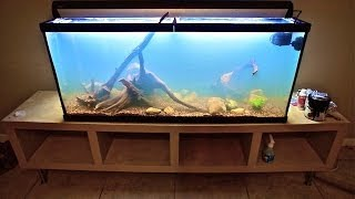 Infamous New World Planted Cichlid Tank Aquascape South Central Americans In This 55 Gallon 1 26 14