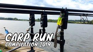 CARP RUN COMPILATION 2019 ПОКЛЕВКИ КАРПА
