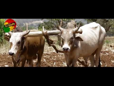 Ethiopia- Abbush Zallaqaa - Fullaanneey [NEW Oromo Music Video 2016] - Burji Tradition.flv