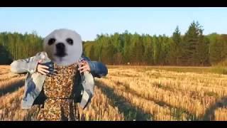 МОНЕТОЧКА - КАЖДЫЙ РАЗ (ft. GABE THE DOG) собака ГЕЙБ