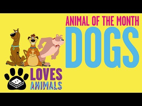 Boomerang Loves Animals | Dog is the Animal of The Month | Boomerang UK
