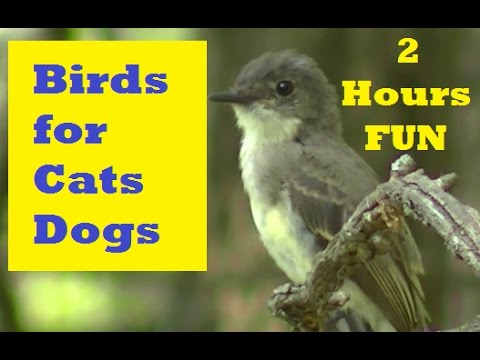 Videos for Cats to Watch-Birds, Squirrels, and Rabbits,