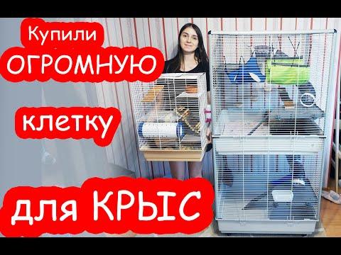Купили ОГРОМНУЮ клетку для КРЫС