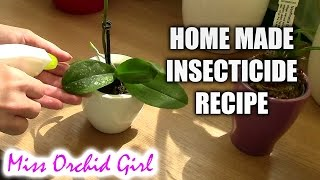 My Home Made Insecticide for Spider Mites (Non Toxic)
