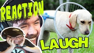 What Are They DOING To That Poor Dog? | Dan Ex Machina Reacts