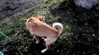 Собака ебет кота без вазелина в день влюбленных