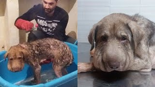 Update 5 on a rescued stray dog that was strangled with a rope on his neck - Delavar