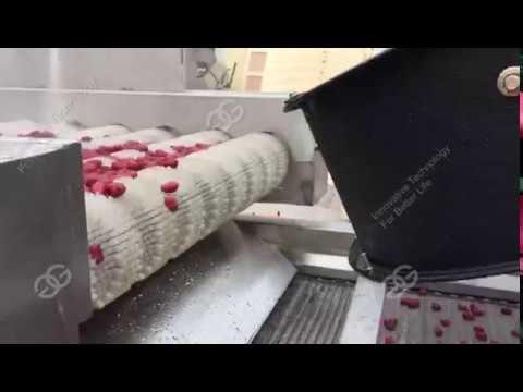 Vegetable Washing Line Conveyor Belt