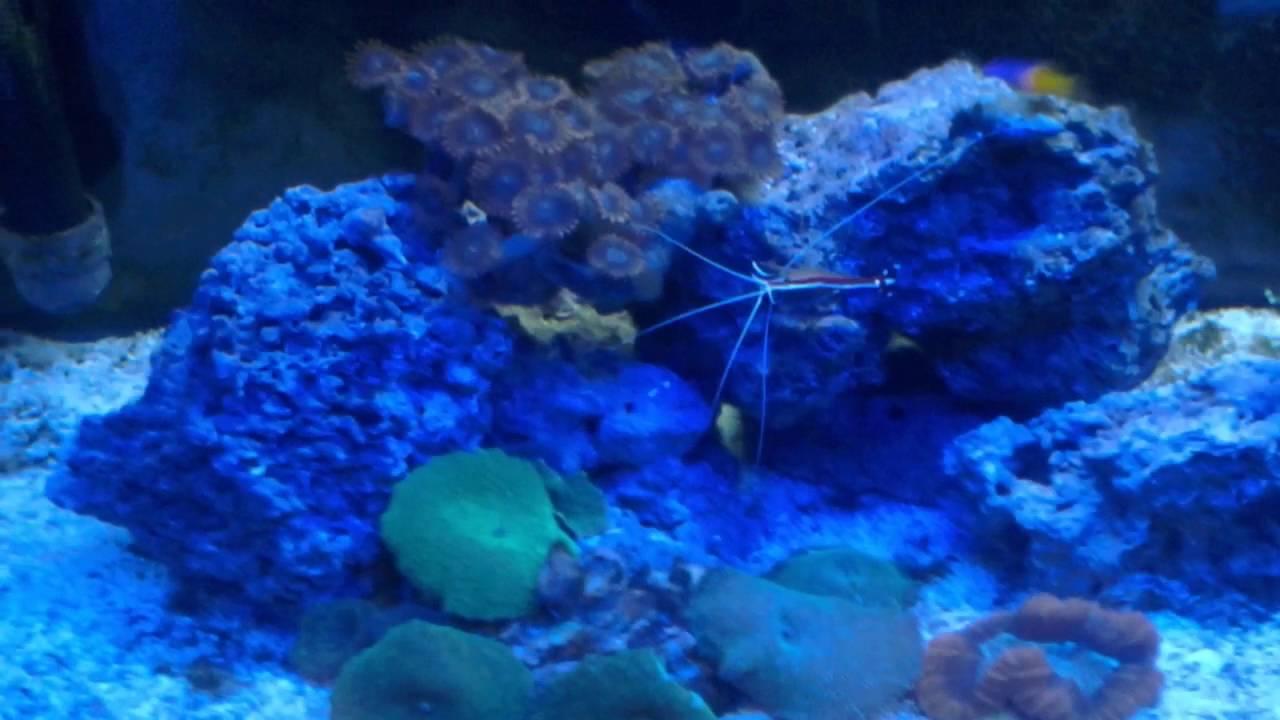 how to get rid of algae in saltwater tank
