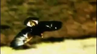 Документальный фильм охоты орлов!Очень интересно