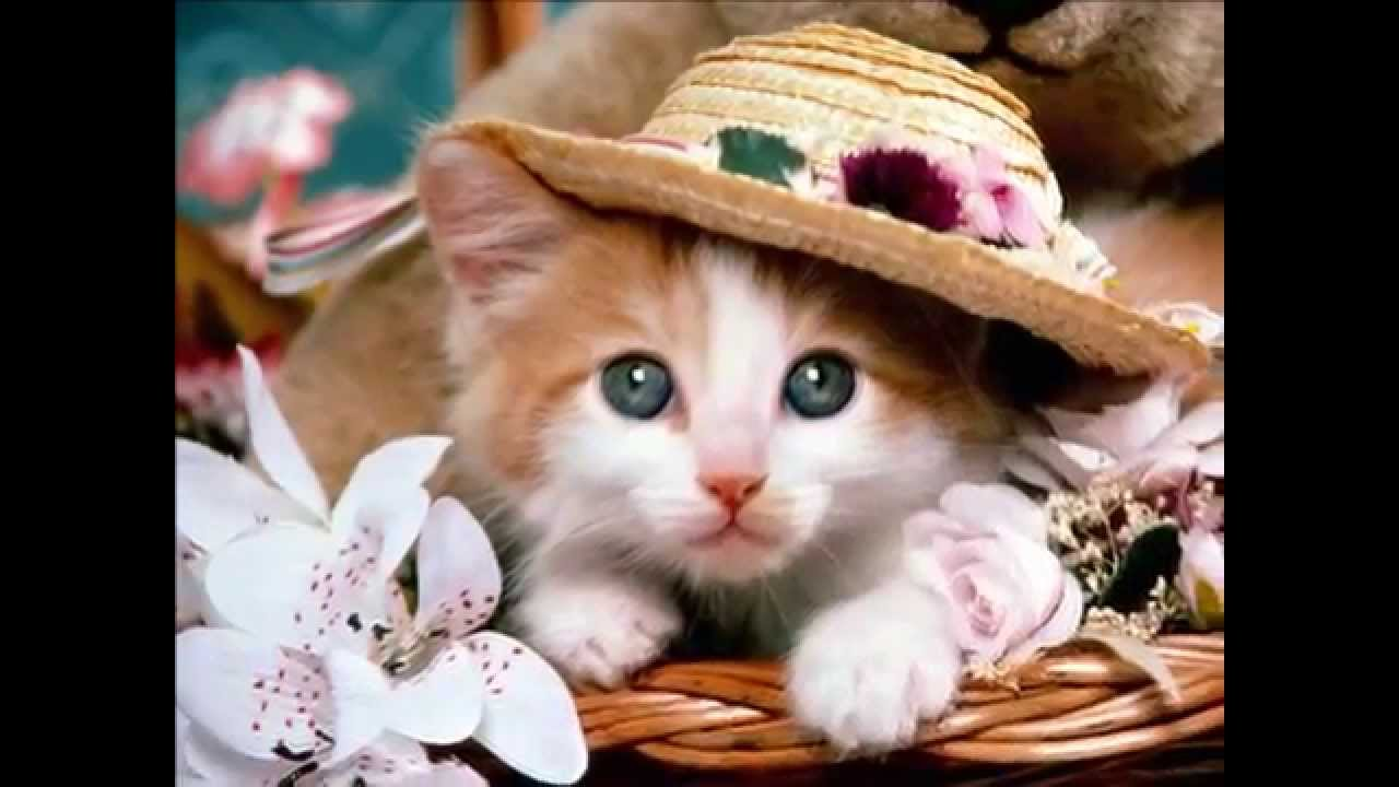 50 The Most Cute Cats and Kittens