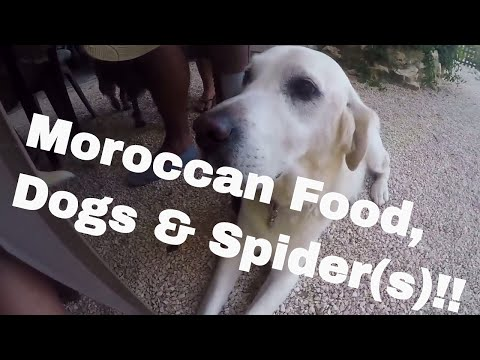 Moroccan Food, Dogs, and Spiders! -- Workaway France  //  033