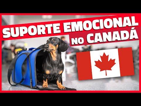 Dicas para levar o cachorro (ou gato) para o Canadá - Pet como Suporte Emocional
