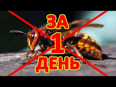 Пчеловодство Как ЗА 1 ДЕНЬ Избавиться от Шершней и Ос на Пасеке