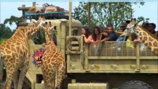 Six Flags Caribbean Concert for 2013 presents the NEW Safari Off Road Adventure