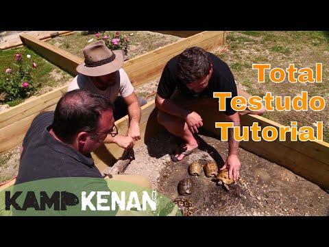 Testudo Tortoise Tutorial!