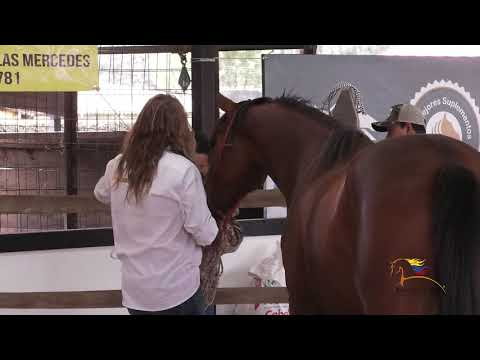 El Domador De Caballos · La Zarina from YouTube · Duration:  46 minutes 8 seconds