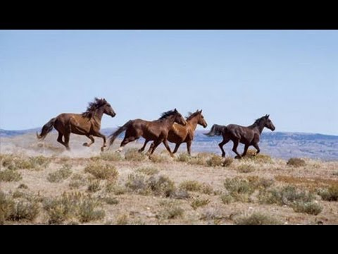 science news: FIRST HORSE ON EARTH