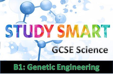 B2 Genetic Engineering (EDEXCEL)