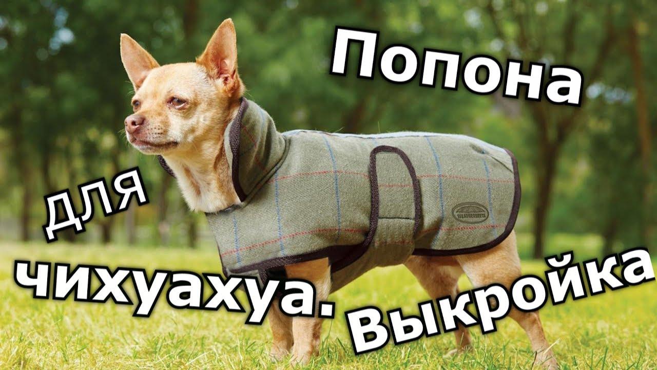 выкройки одежды для собак чихуахуа одежда комбинезон собака